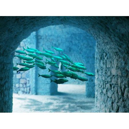 laminated poster fish sea atlantis underwater water poster print 24