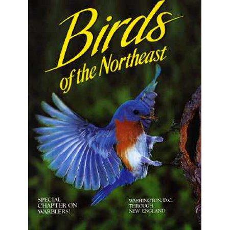 Birds of the Northeast : Washington, D.C. Through New England (Birds New England)