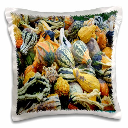 3dRose Gourds in all Colors and Shapes - Pillow Case, 16 by 16-inch (Gourd Shape)