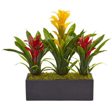 Bromeliads in Rectangular Planter ()