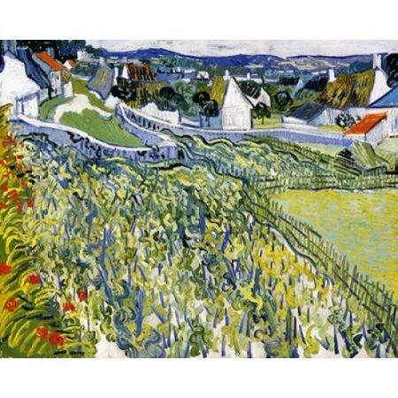 Vineyards Auvers Poster Print by  Vincent Van Gogh Auvers Poster Print