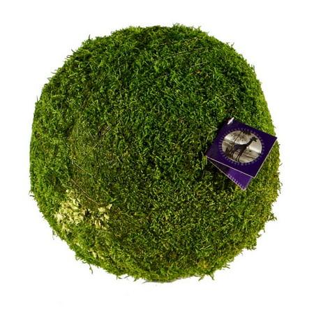"""Super Moss 4"""" Sheet Moss Ball Green"""