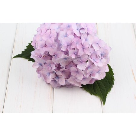 Laminated Poster White Bouquet Nature Flower Hydrangea Spring Poster
