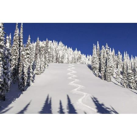 Ski Tracks Off of Lodi at Whitefish, Mountain Resort, Montana, Usa Print Wall Art By Chuck Haney ()