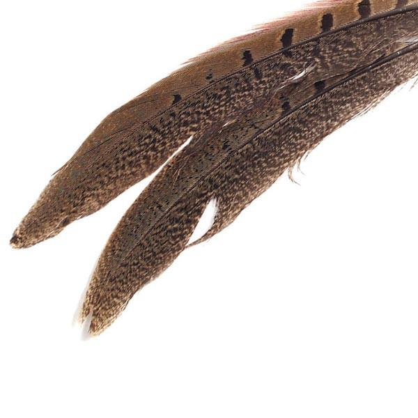 "Ring Neck Tail Feather 8 - 10"" - image 1 de 1"