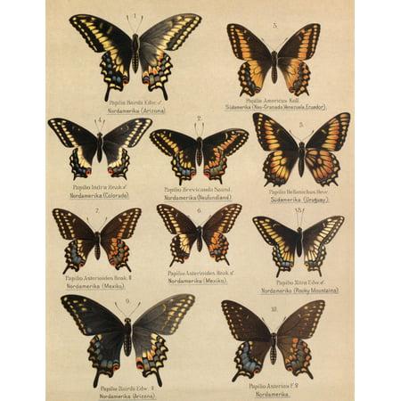 Die Artbildung Und Verwandtschaft 1889 Asterias Group 1 Canvas Art   Unknown  18 X 24