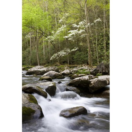 Dogwood Trees in Spring Along Little River, Great Smoky Mountains National Park, Tennessee Print Wall Art By Richard and Susan Day