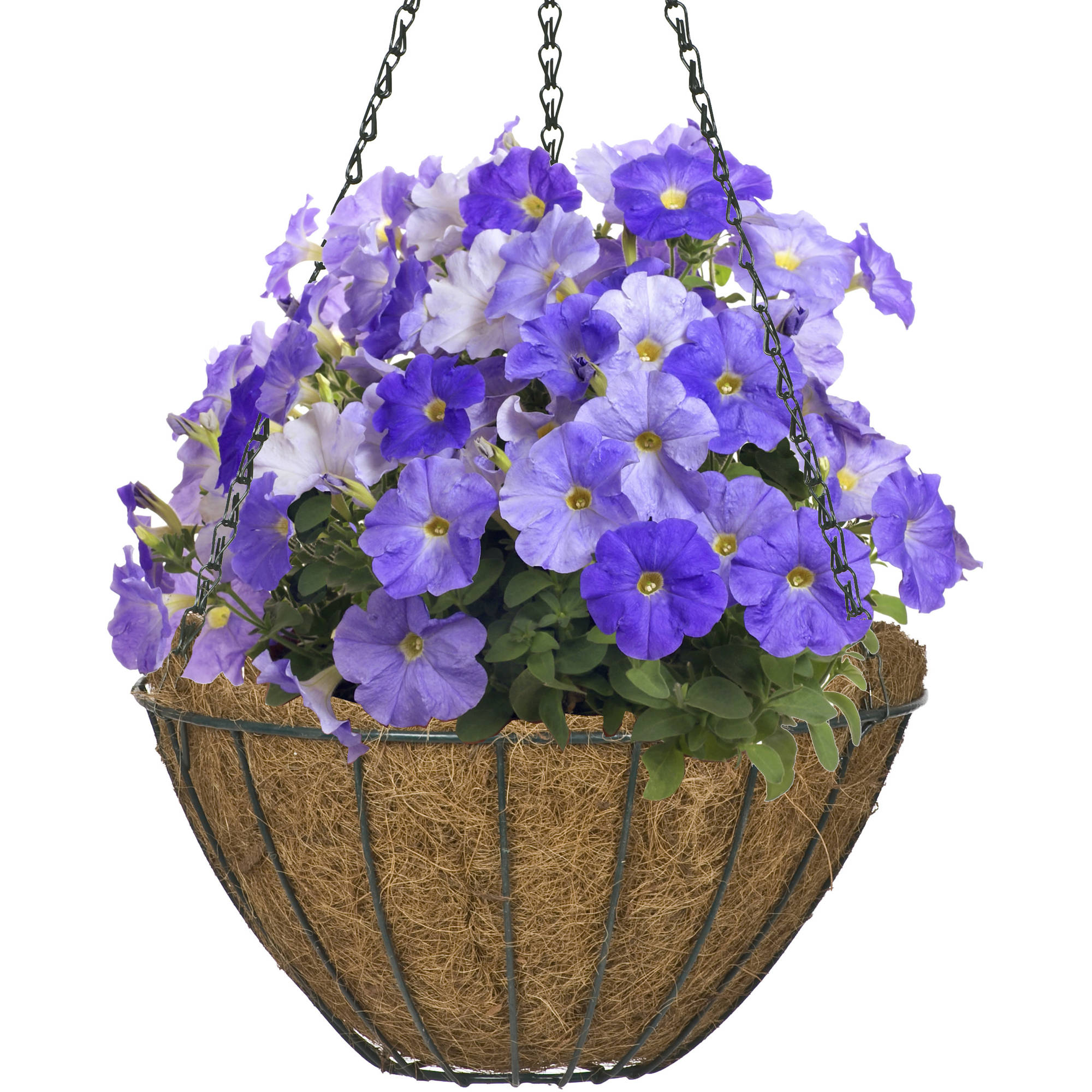 "CobraCo Black Growers Style 14"" Hanging Basket"