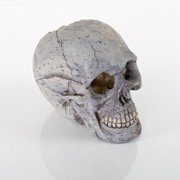 "Decorative Human Skull, Large, 6.25"" x 3.5"" x 5.5"""