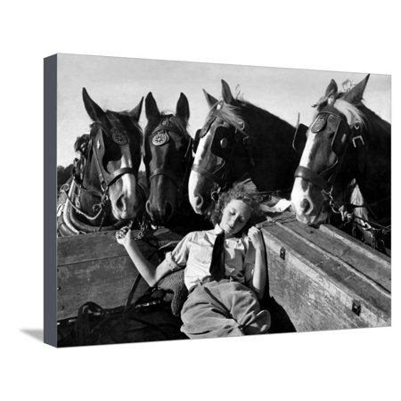 Member of the Women's Land Army a Sleep in the Back of a Hay Cart While the Horses Look On Stretched Canvas Print Wall Art