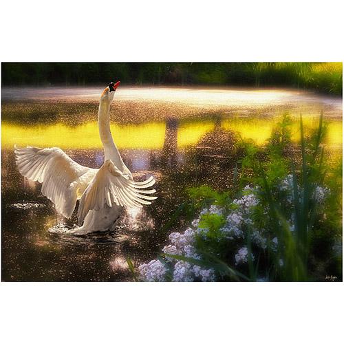 "Trademark Fine Art ""Swan Lake"" Canvas Art by Lois Bryan"