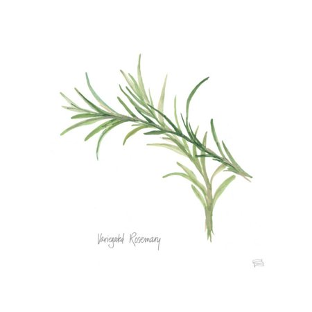 Variegated Rosemary V2 Print Wall Art By Chris (Rosemary Walls Art)