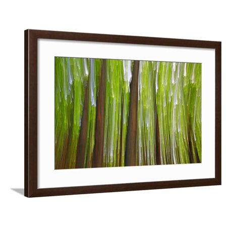 Sunset Maple (Canada, Quebec, Mount St-Bruno Conservation Park. Maple Grove Abstract at Sunset Framed Print Wall Art By Jaynes Gallery)