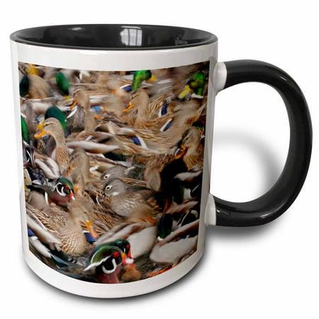 3dRose New Mexico, Albuquerque, Rio Grande Zoo. Waterfowl - US32 BJA0058 - Jaynes Gallery - Two Tone Black Mug, 11-ounce