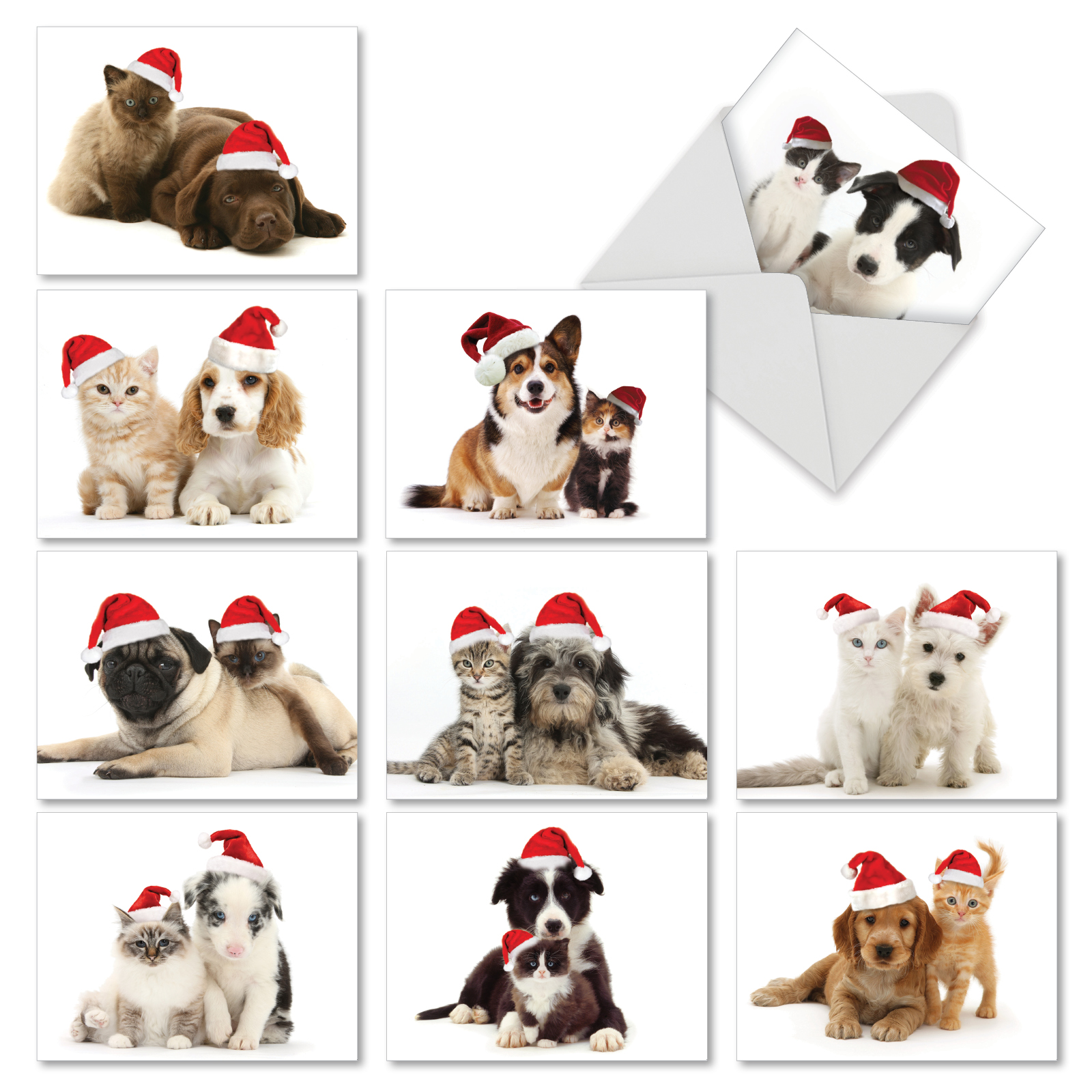 M6596XSB CHRISTMAS COPY CATS' 10 Assorted Merry Christmas Cards with Envelopes by The Best Card Company