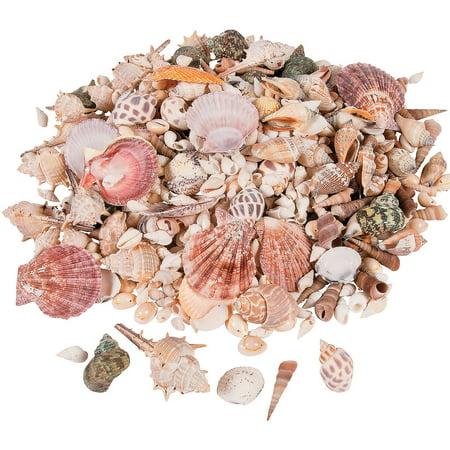 Fun Express - Sea Shell Assortment - Craft Supplies - Bulk Craft Accessories - Feathers And Shells - 150 Pieces