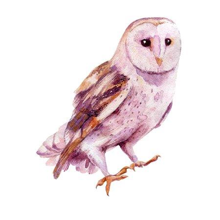 Owl Home Wall Shelf Decor Animal Decorations Watercolor Prints](Shelf Decorations)