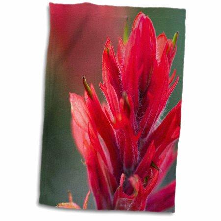 3dRose Indian Paintbrush, Scarlet Paintbrush, Flower - NA01 FZU0015 - Frank Zurey - Towel, 15 by 22-inch - Paul Frank Towel