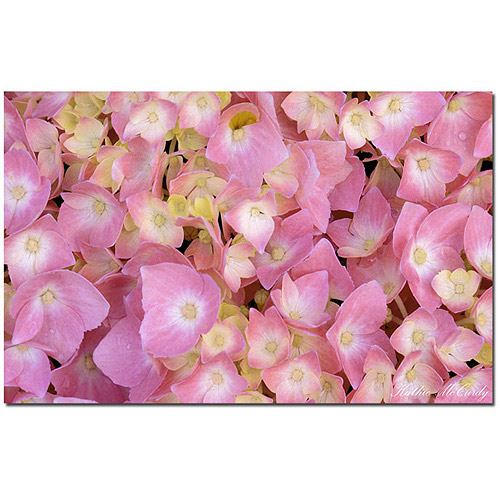 "Trademark Fine Art ""Pink Hydrangea"" Canvas Art by Kathie McCurdy"