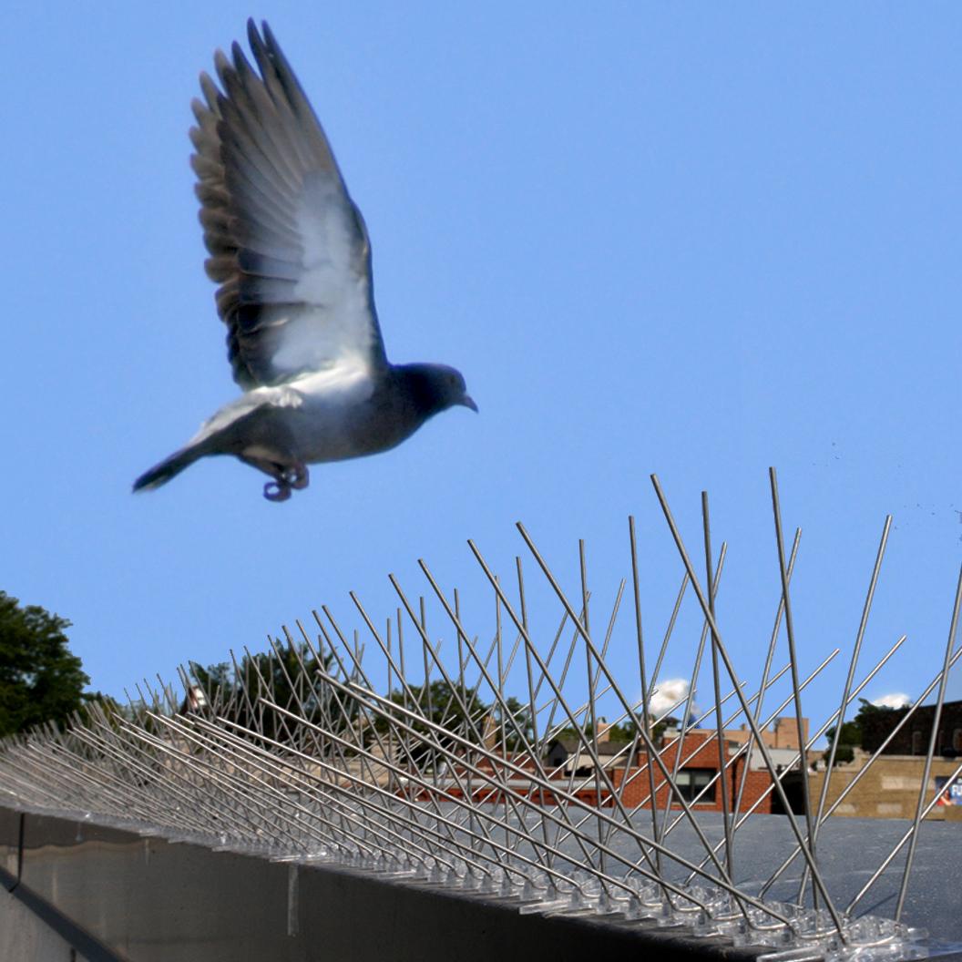 Bird-X Extra-Wide Stainless Steel Bird Spikes, 24'