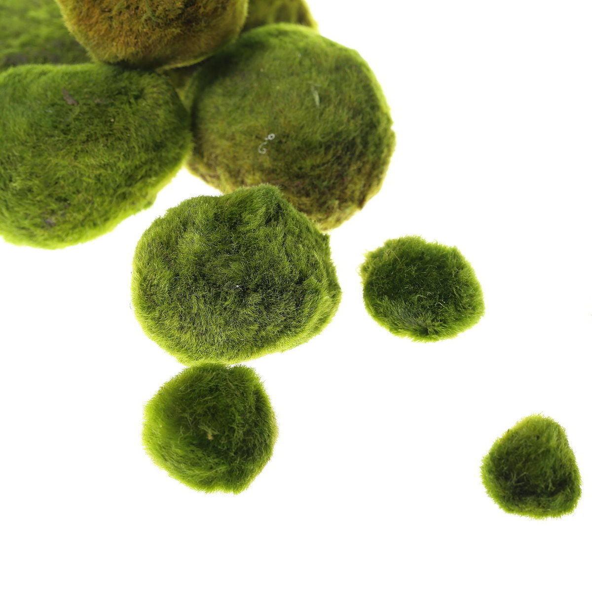 "Giant Marimo Moss Balls - Live aquarium tank plants low lightNo pesticides (1.5"" - 2""x 2 +1 free)"