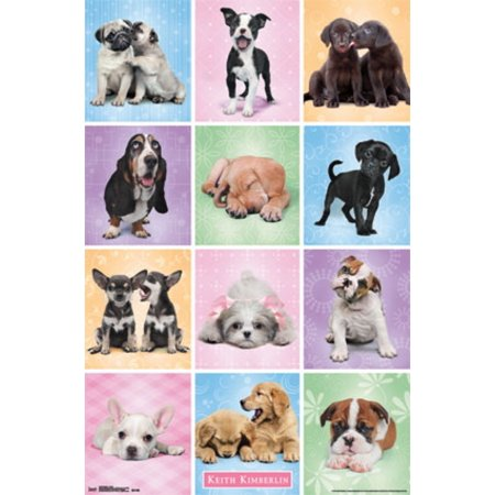 Puppies - Cuties Poster Print - Puppy Posters