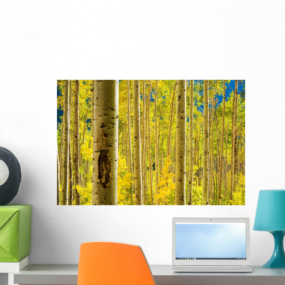 Aspen Trees Forest Wall Mural by Wallmonkeys Peel and Stick Graphic ...