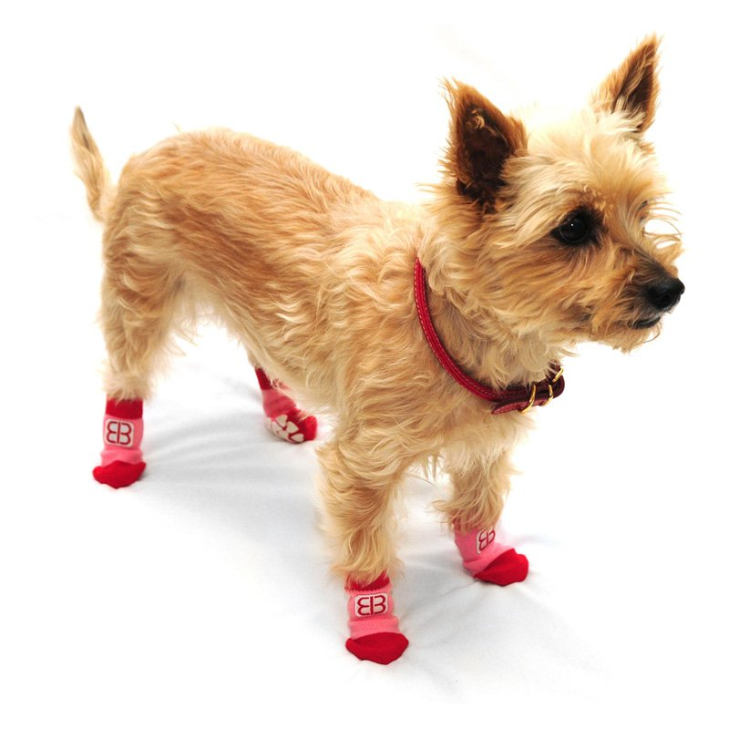 Pet Ego Home Comfort Traction Control Socks