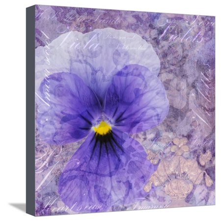 Viola - Secret Love Stretched Canvas Print Wall Art By Cora Niele