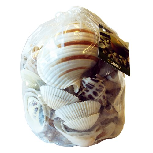 Akasha Extra-Large White Shells