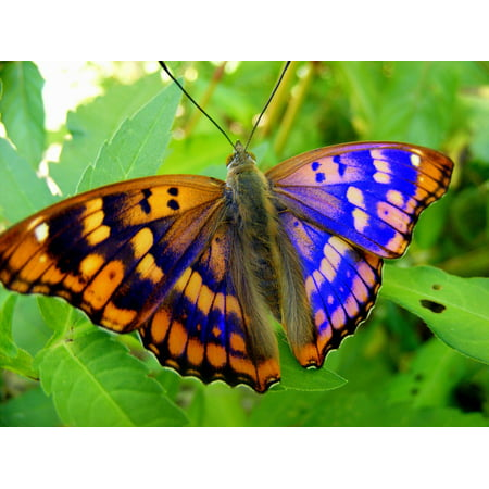 LAMINATED POSTER Flower Blue Green Yellow Leaf Nature Butterfly Poster Print 24 x 36 - Light Blue Butterfly