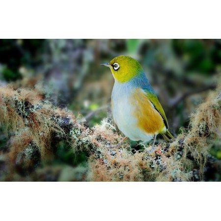 LAMINATED POSTER Wildlife Bird Wings Beak Feather Fly Wax Eye Poster Print 24 x 36 ()