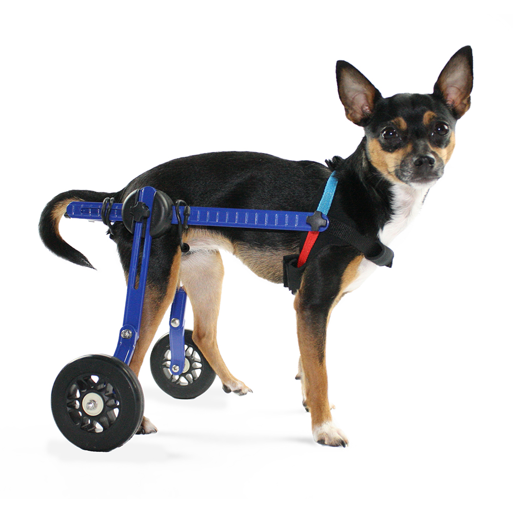 Dog Wheelchair -XS for Mini/Toy Breeds 2-10 lbs-Veterinarian Approved