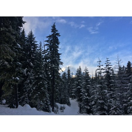 - Canvas Print Hood Mt Environment Forest Trees Snow Natural Stretched Canvas 32 x 24