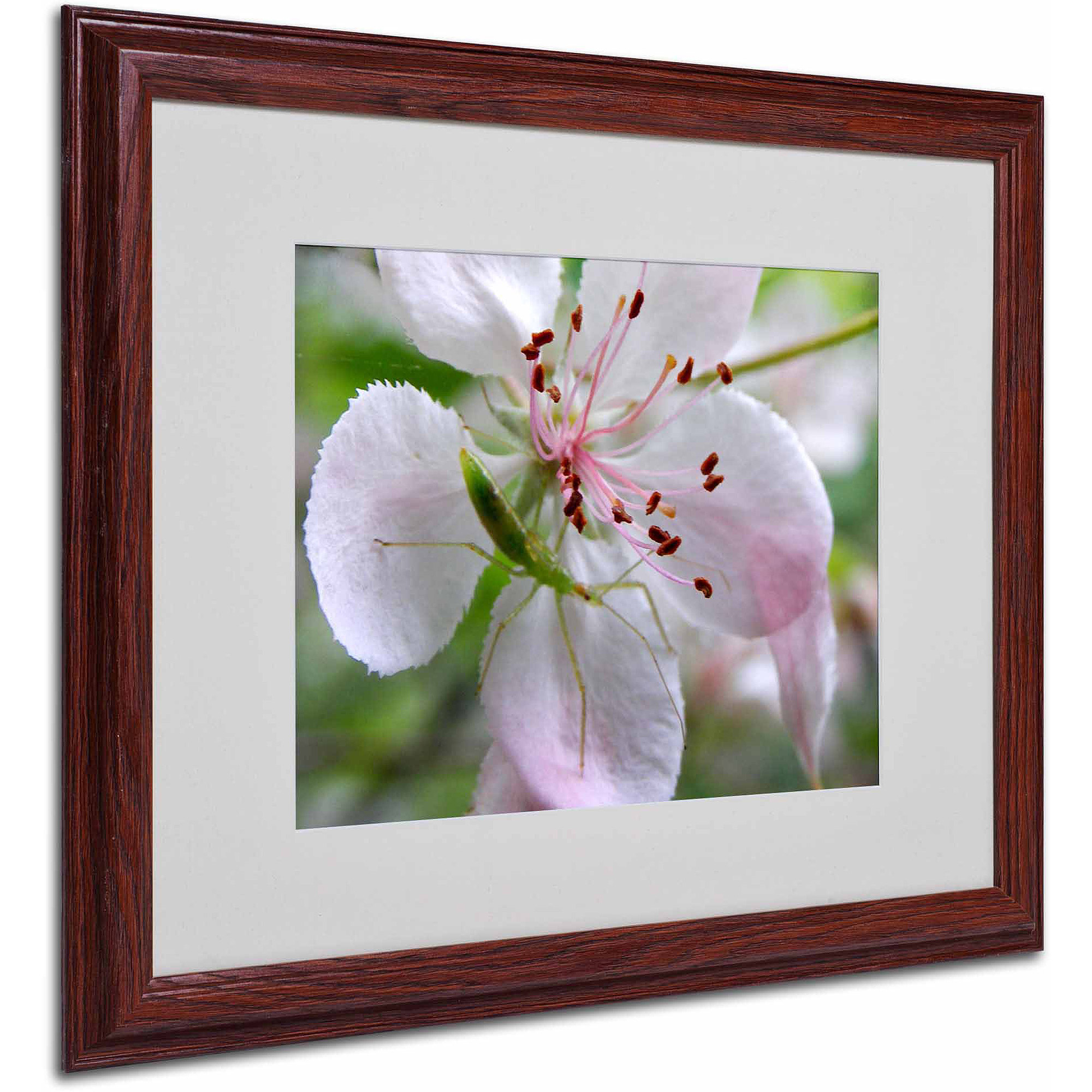 "Trademark Fine Art ""Natural Haven"" Canvas Art by Monica Fleet, White Matte, Wood Frame"