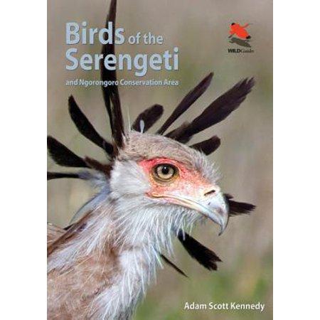 Birds of the Serengeti : And Ngorongoro Conservation