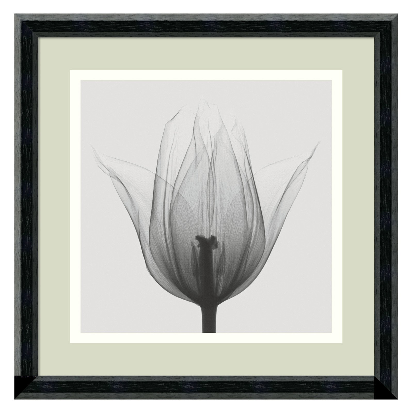 Triumph Tulip Framed Wall Art by Steven N. Meyers - 12.02W x 12.02H in.