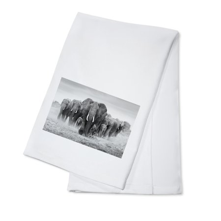 Elephant Herd - Lantern Press Photography (100% Cotton Kitchen Towel) ()