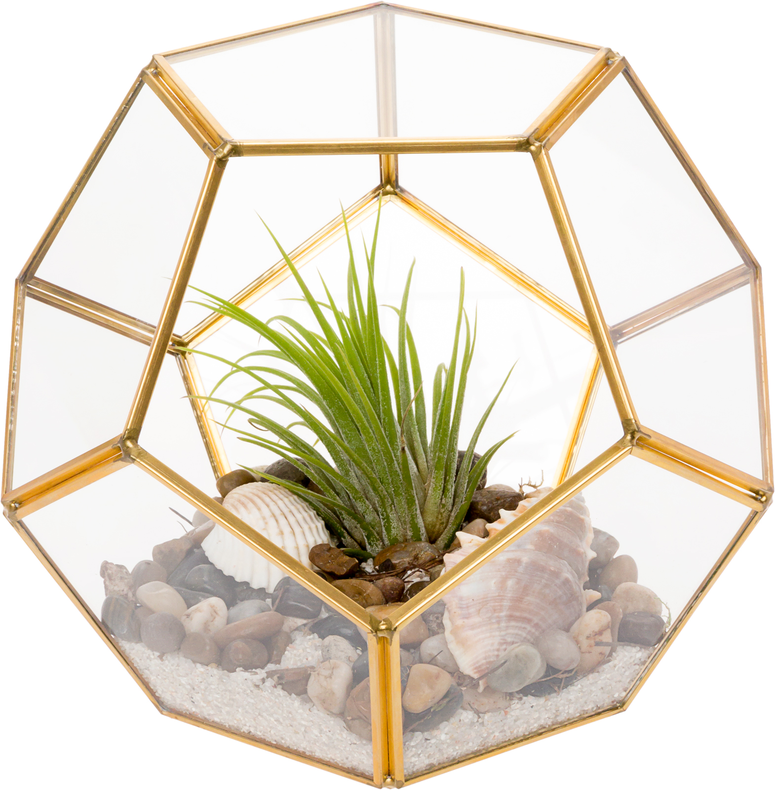 Mindful Design Geometric Dodecahedron Desktop Garden Planter Glass Terrarium