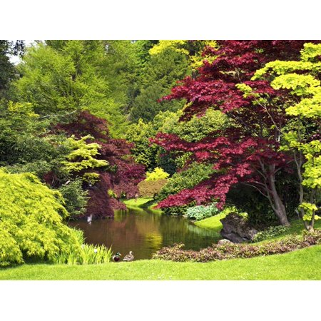Acer Trees and Pond in Sunshine, Gardens of Villa Melzi, Bellagio, Lake Como, Lombardy, Italy Print Wall Art By Peter Barritt