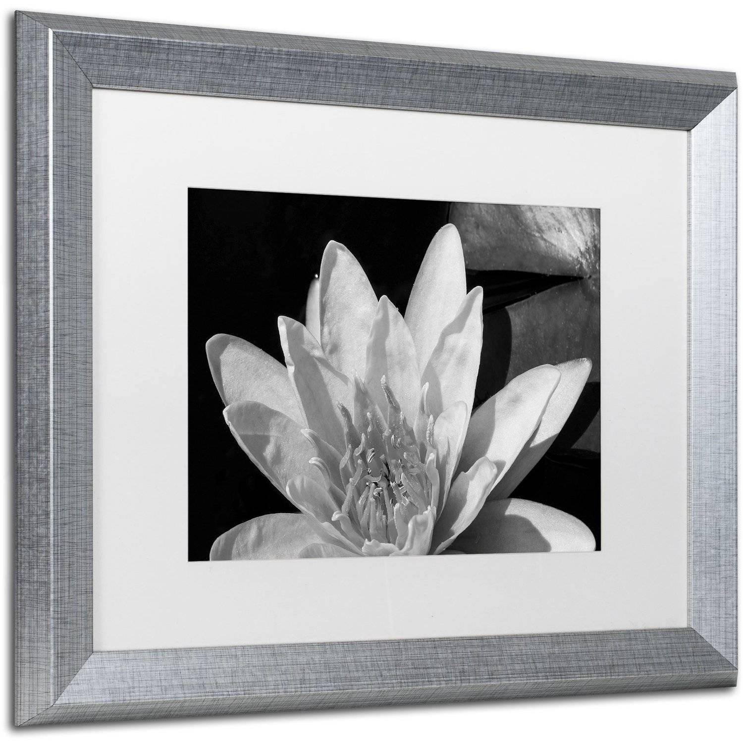 Trademark fine art water lily in black and white canvas art by kurt shaffer white matte silver frame