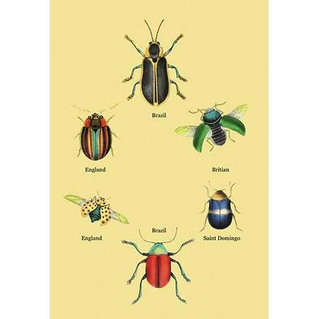 "Beetles of Brazil, Britain, England and Saint Domingo #2- Fine Art Canvas Print (20"" x 30"")"