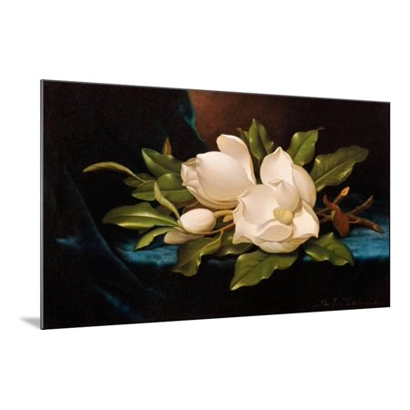 Giant Magnolias on Blue Cloth Wood Mounted Print Wall Art By Martin Johnson - Giant Magnolias