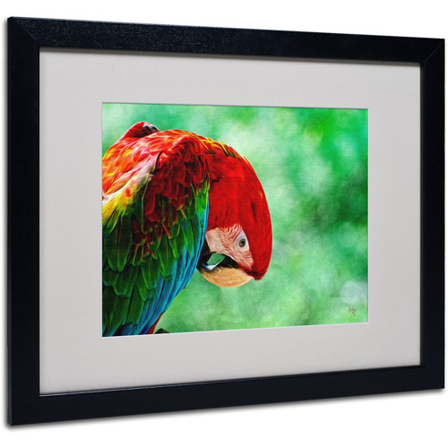 "Trademark Fine Art ""Colorful Macaw"" by Lois Bryan, Black Frame"