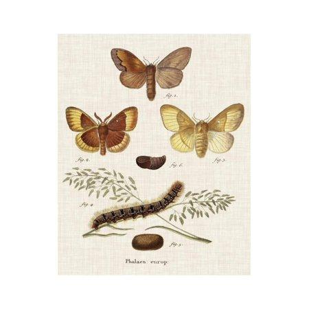 Life Cycle of a Moth I Print Wall Art By Johann Esper