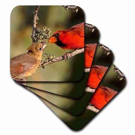 3dRose Texas, Rio Grande Valley, Northern cardinal birds - US44 BJA0049 - Jaynes Gallery, Soft Coasters, set of 4 Gallery Wine Coaster