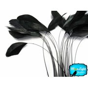 1 Dozen - Black Stripped Coque Tail Feathers