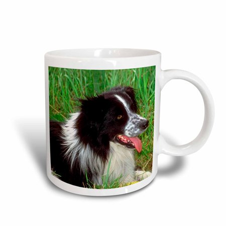 3dRose Border Collie, Ceramic Mug, 11-ounce