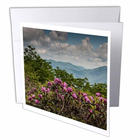 3Drose Catawba Rhododendron  Craggy Gardens  Blue Ridge Parkway  Nc  Usa  Greeting Cards  6 X 6 Inches  Set Of 12
