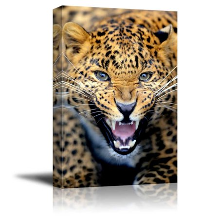 Leopard Decorations (Canvas Prints Wall Art - Angry Leopard Wild Animal/Beast Photograph | Modern Wall Decor/Home Decoration Stretched Gallery Canvas Wrap Giclee Print & Ready to Hang - 32